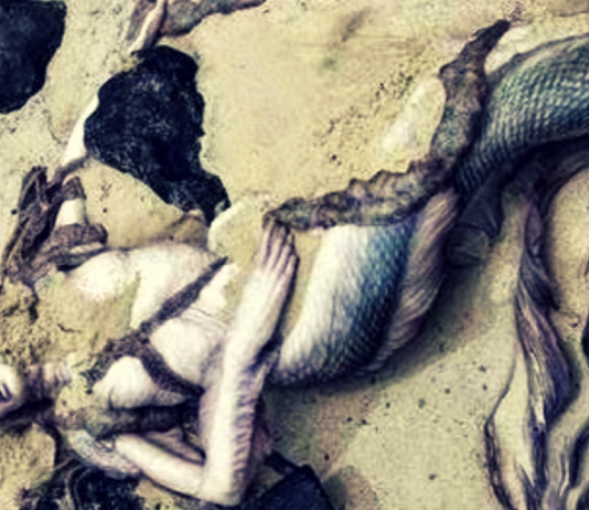 The Anatomy of a Mermaid Scales and Sinew